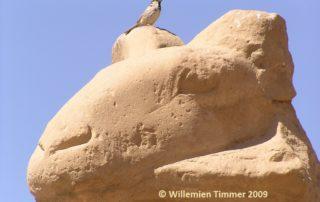 apofyliet.nl - channeling van Amun Ra
