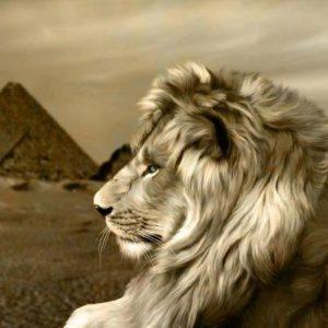 lion-piramids