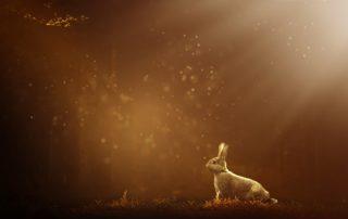 apofyliet.nl - konijnen en gremlins